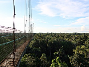 Sacha Lodge Canopy Walk_neu